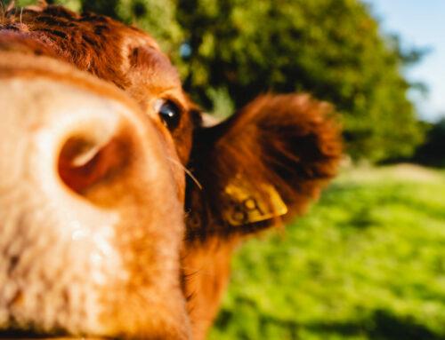 Il latte europeo: un prodotto dai solidi valori
