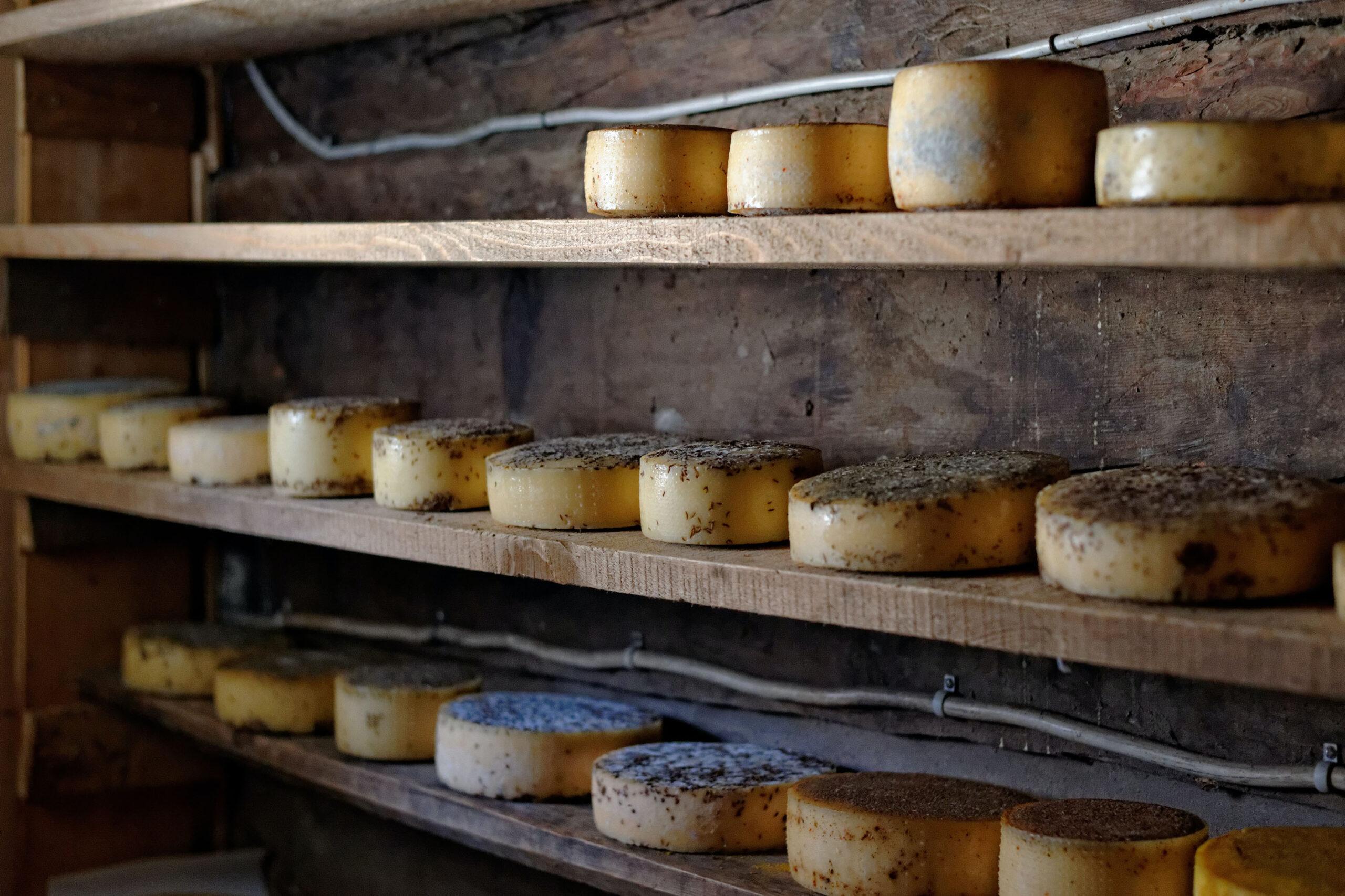 formaggio d'alpeggio